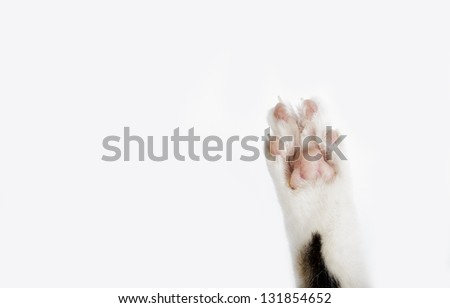 Detail of Soft Cat Paws on white background - stock photo