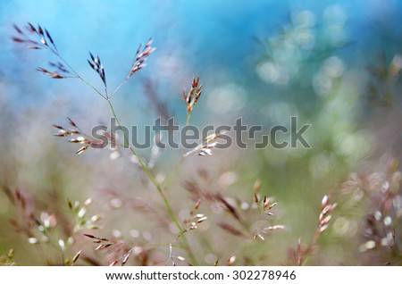 Detail of some flowering grass bending in the wind. - stock photo