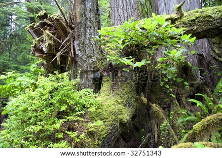 Detail of Temperate Rainforest on the Pacific Coast