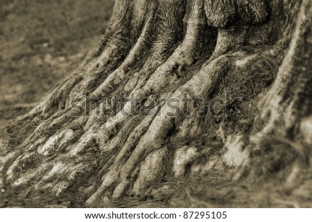 detail of the base of a tree with visible roots - stock photo