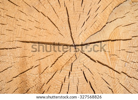 Detail of the cut of a pine trunk, closeup, Italy - stock photo