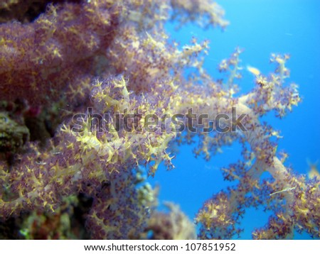 Detail of the softcoral - Dendronephthya hemprichi - stock photo