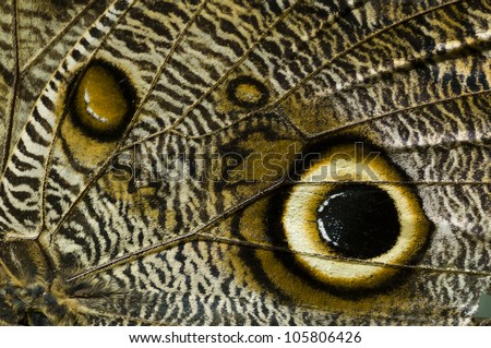 Detail of tropical butterfly wing - stock photo