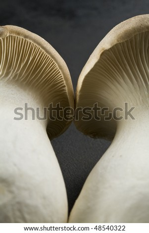 Detail of two king oyster mushrooms - stock photo