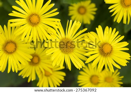 Detail of yellow Flowers - stock photo