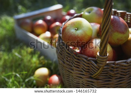 Detail shot of basket and crate of apples on grass - stock photo