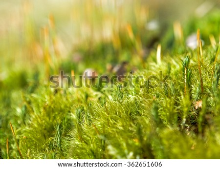 detail shot of some fresh moss at spring time - stock photo