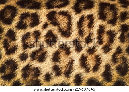 detail  skin  of  leopard; leopard texture - stock photo