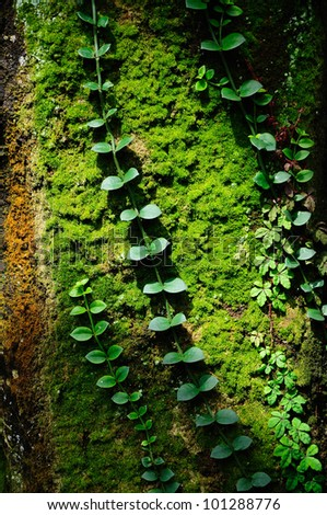 Detail view of some green moss and little plants on the bark of a tree. - stock photo