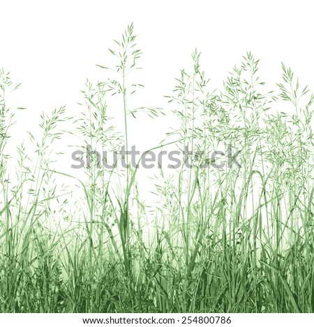 Detailed Abstract Meadow Grass Background Isolated On White, Macro Closeup, Large Detailed Pattern - stock photo