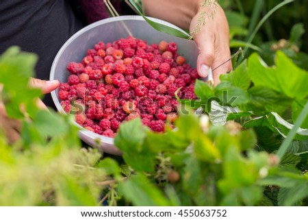 Detailed image of a real forest raspberries in bowl