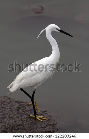 Detailed image of a white egret in the border of river Douro - stock photo