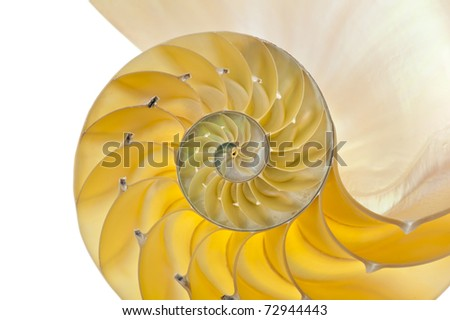 Detailed photo of a halved backlit  shell of a chambered nautilus (Nautilus pompilius) - stock photo