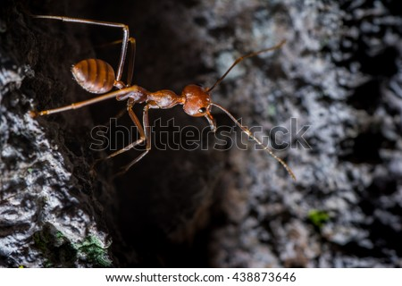 Detailed photo of an ant under the ground. Brown Ant macro photo. Brown ant with cherries and mustache close-up - stock photo