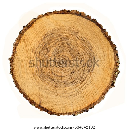 Stock Photo Detailed Piece Of Circular Flat Cut Wood Showing Annual Rings Cracks Bark And Texture Tree Ring