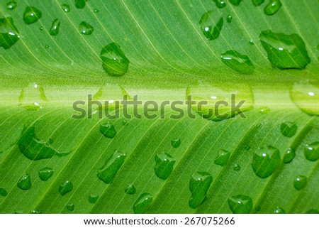 Detailed rain droplets over green leaf. - stock photo