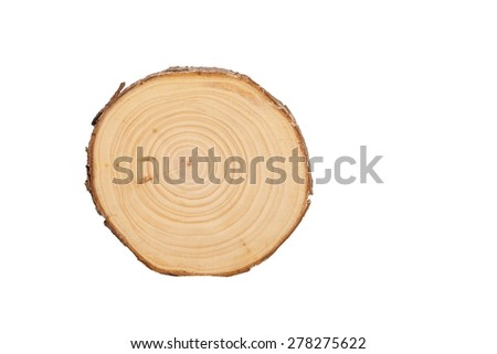 detailed sectional view of the tree (white background) - stock photo
