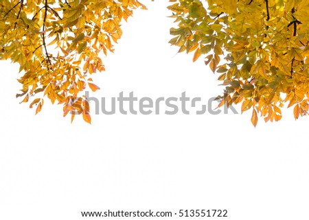 Detailed tree branches with yellow leaves, Fall background in red tones, autumn leaves and blue sky, Abstract natural backgrounds with beauty bokeh.