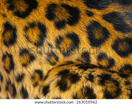 Detailed view of leopard skin with black circlces - stock photo