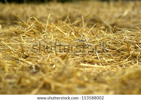 Details of hay straw on a bale in close up view agriculture background image - stock photo