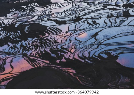 Details of rice fields on terraced in yuanyang,china