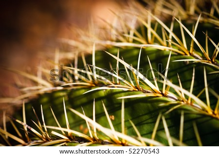 Details of the Golden Barrel Cactus, Golden Ball or, amusingly, Mother-in-Law's Cushion (Echinocactus grusonii) is a well known species of cactus native to central Mexico.