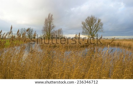 Deteriorating weather over the shore of a river at fall - stock photo