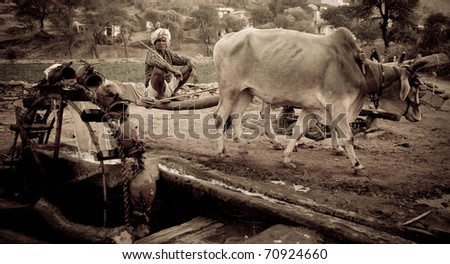 DEVI GARH, INDIA - CIRCA JANUARY 2007: An Indian man drives cattle to draw water from a well circa January 2007 in Devi Gahr, India. Tourism at the hotel helps support the local farming community. - stock photo