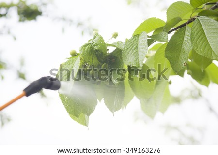 Device of spraying pesticide. Green cherry under the spray. Pests are killed by spraying. - stock photo