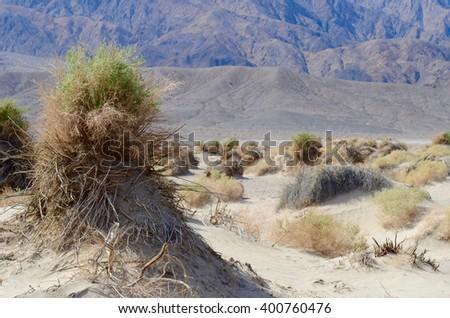 Devils cornfield, Death Valley California. - stock photo