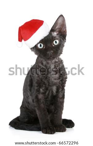 Devon-Rex black cat in christmas cap on a white background - stock photo