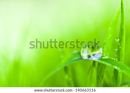dew - stock photo