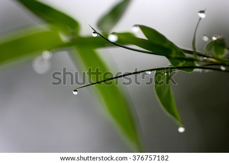 Dew and bamboo leave.