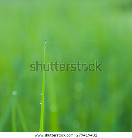 Dew atop the blades of grass in focus light.