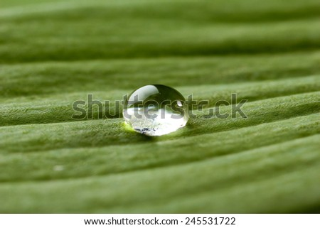 Dew drop on leaf, macro view - stock photo