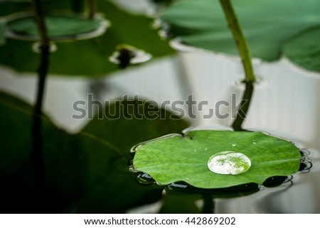 Dew drop water on the Lotus leaf - stock photo
