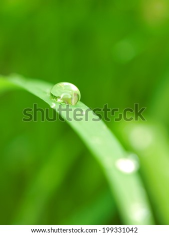 dew droplet on the grass,closeup selective focus,for backgrounds,environment,nature themes - stock photo