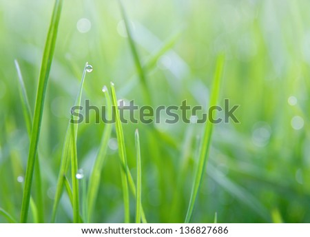Dew droplets on grass - stock photo