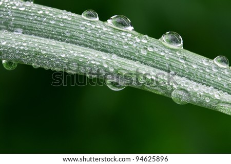 Dew drops on a blade of grass - stock photo