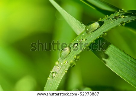 Dew drops on a green grass