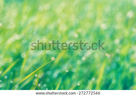 Dew drops on fresh green grass in close-up - stock photo