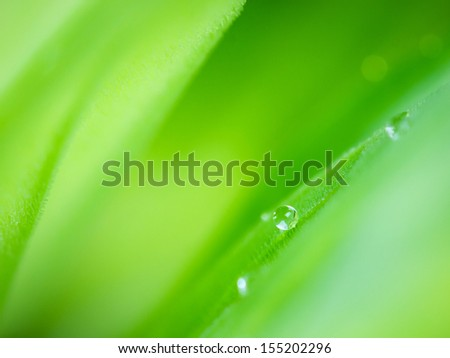 Dew drops on leaf close up  - stock photo