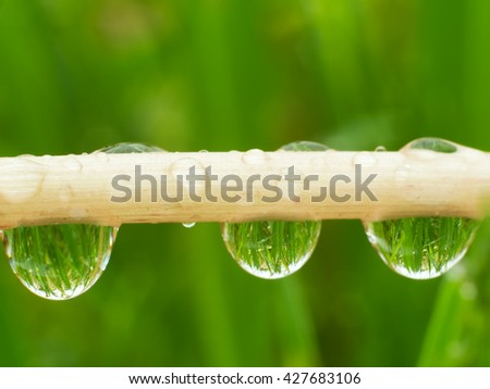 Dew on a dandelion stalk. Nature composition. - stock photo