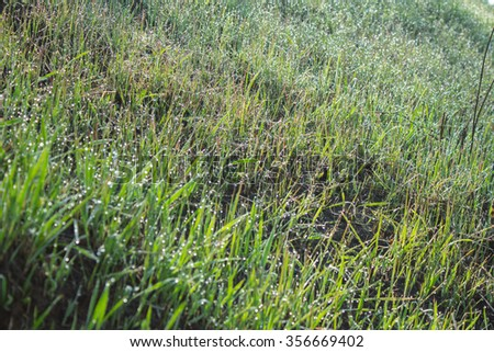 Dew on a morning grass - stock photo