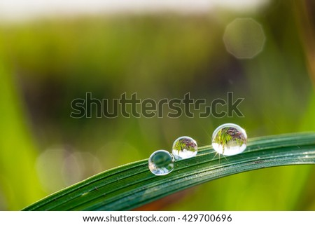 dew on grass in morning  - stock photo