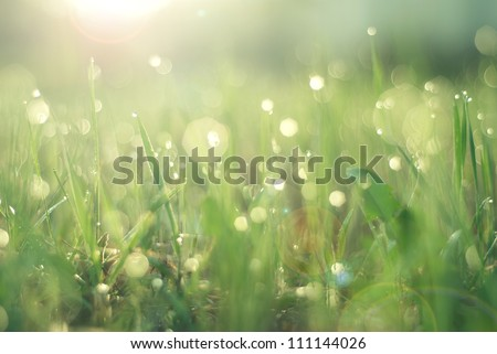 Dew on grass on a sunny Spring morning with the sun shining in the background - stock photo