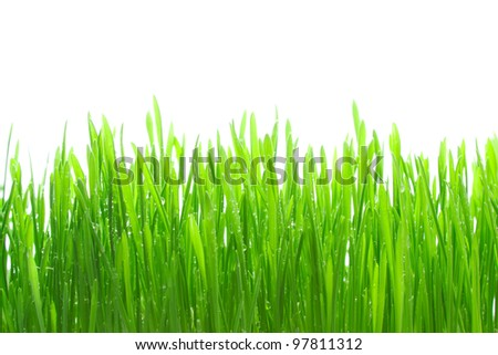 Dew on grass on the white background - stock photo