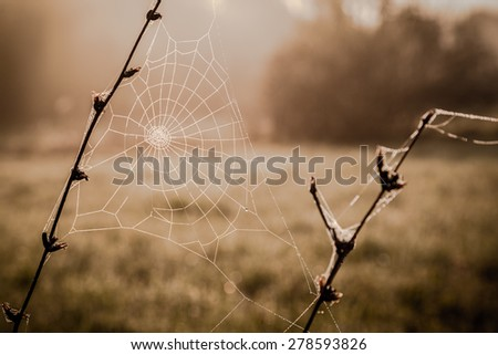 Dew on spiderweb, sepia color toned image, autumn concept - stock photo