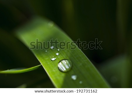 Dew on the grass - stock photo