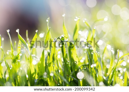 dew on the grass in nature